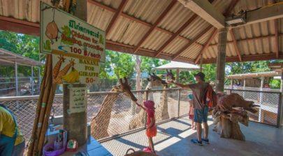 Pattaya Crocodile Farm
