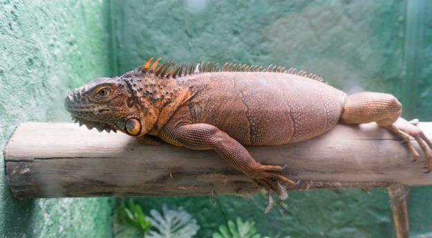 Monster Aquarium Pattaya