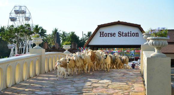 Pattaya Swiss Sheep Farm